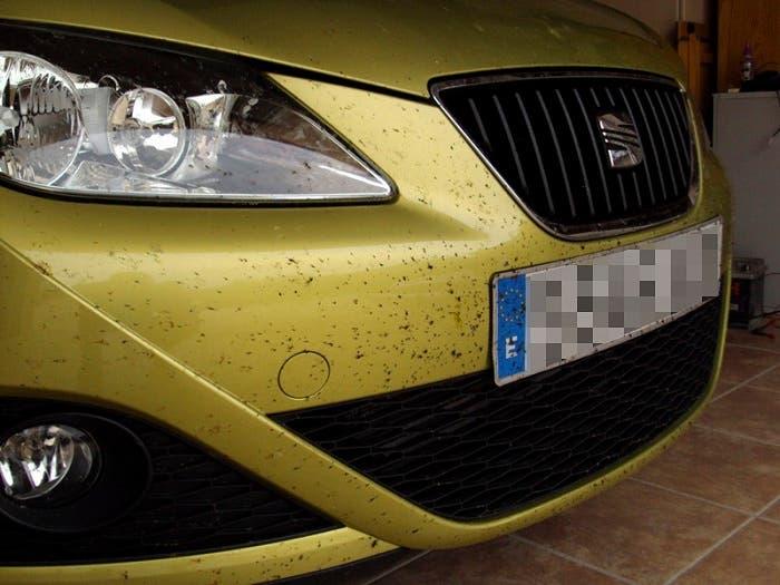 Seat Ibiza lleno de mosquitos