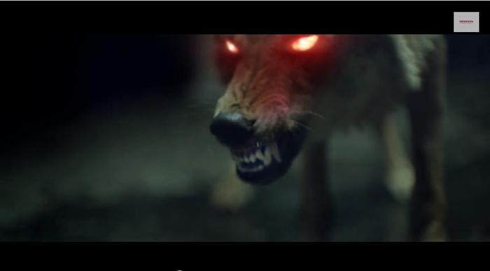 Agresivo lobo con los ojos rojos