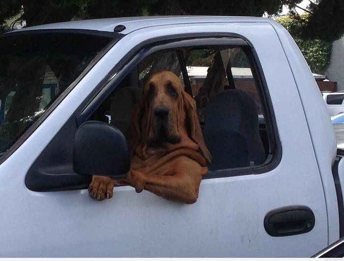 Chucho al volante