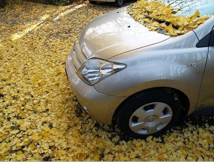 Vehículo lleno de hojas de árboles