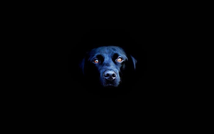 Perro negro espectral