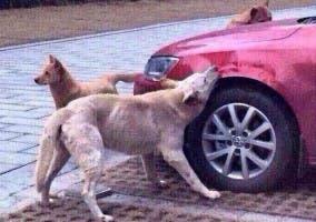 Coche mordido por un perro
