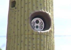 Cámara de radar oculta dentro de un cactus